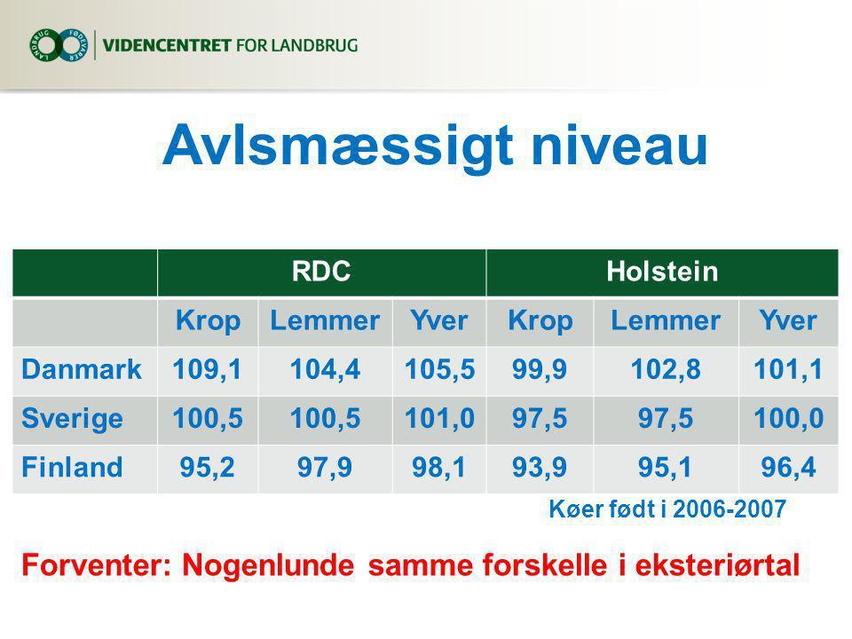 Avlsmæssigt niveau RDCHolstein KropLemmerYverKropLemmerYver Danmark109,1104,4105,599,9102,8101,1 Sverige100,5 101,097,5 100,0 Finland95,297,998,193,995,196,4 Køer født i 2006-2007 Forventer: Nogenlunde samme forskelle i eksteriørtal