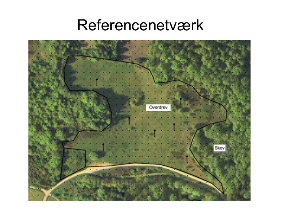 Referencenetværk