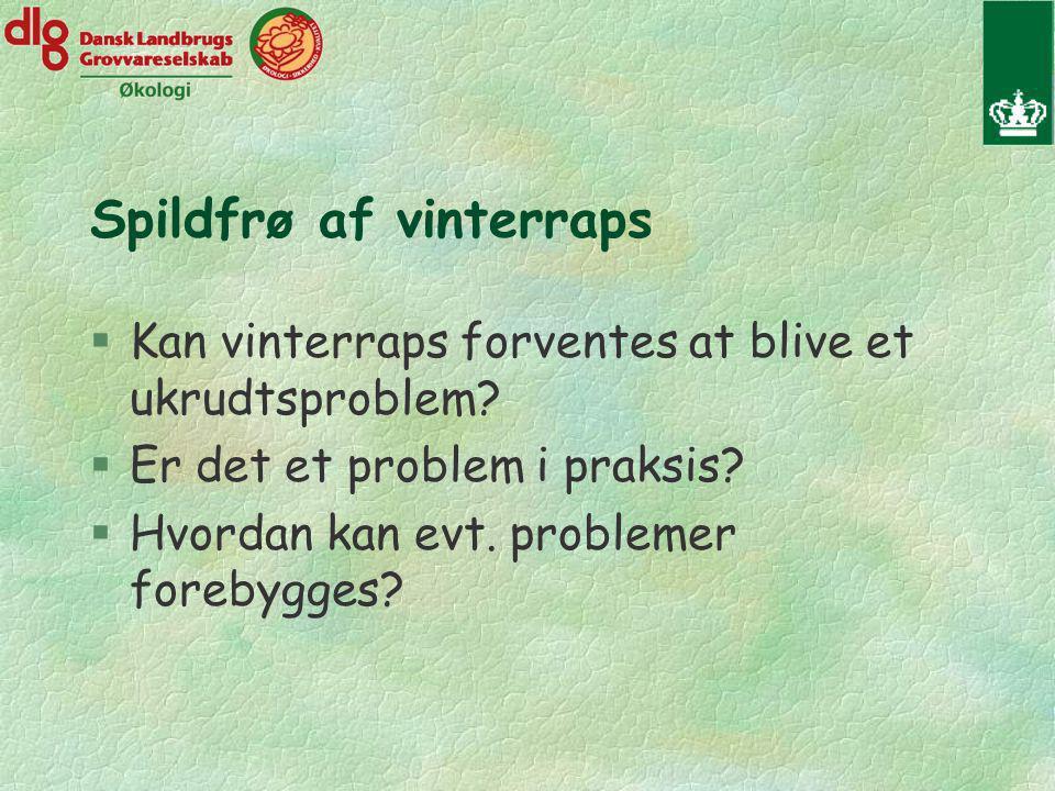 Spildfrø af vinterraps §Kan vinterraps forventes at blive et ukrudtsproblem.