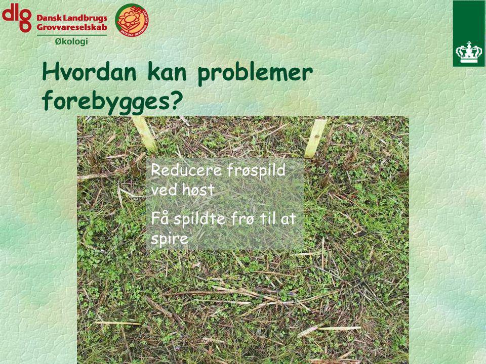 Hvordan kan problemer forebygges Reducere frøspild ved høst Få spildte frø til at spire