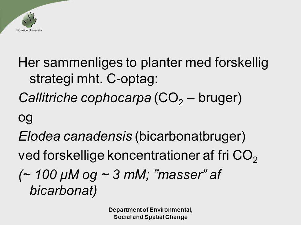 Her sammenliges to planter med forskellig strategi mht.