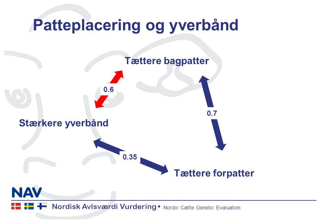 Nordisk Avlsværdi Vurdering Nordic Cattle Genetic Evaluation Patteplacering og yverbånd Stærkere yverbånd Tættere bagpatter Tættere forpatter 0.6 0.35 0.7