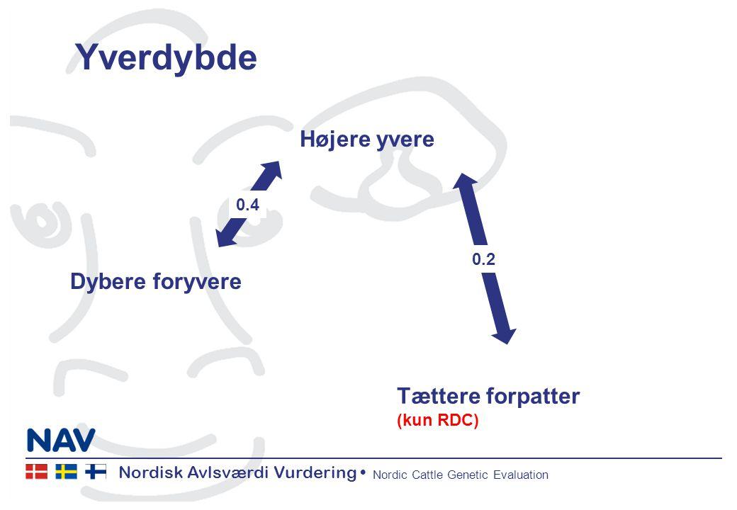 Nordisk Avlsværdi Vurdering Nordic Cattle Genetic Evaluation Yverdybde Dybere foryvere Højere yvere Tættere forpatter (kun RDC) 0.4 0.2