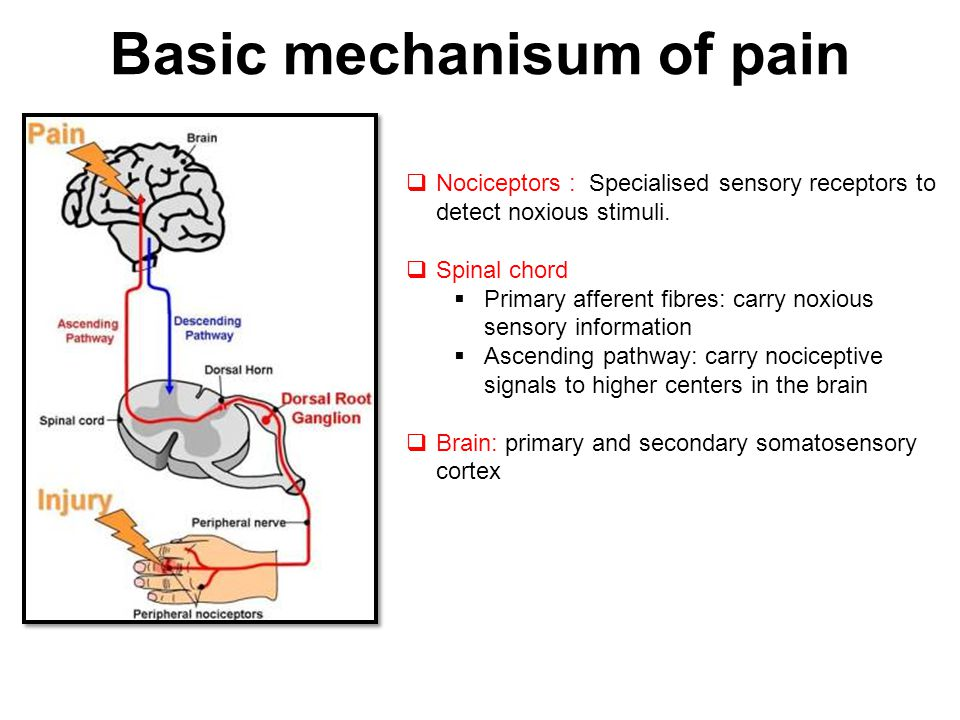 Basic mechanisum of pain  Nociceptors : Specialised sensory receptors to detect noxious stimuli.