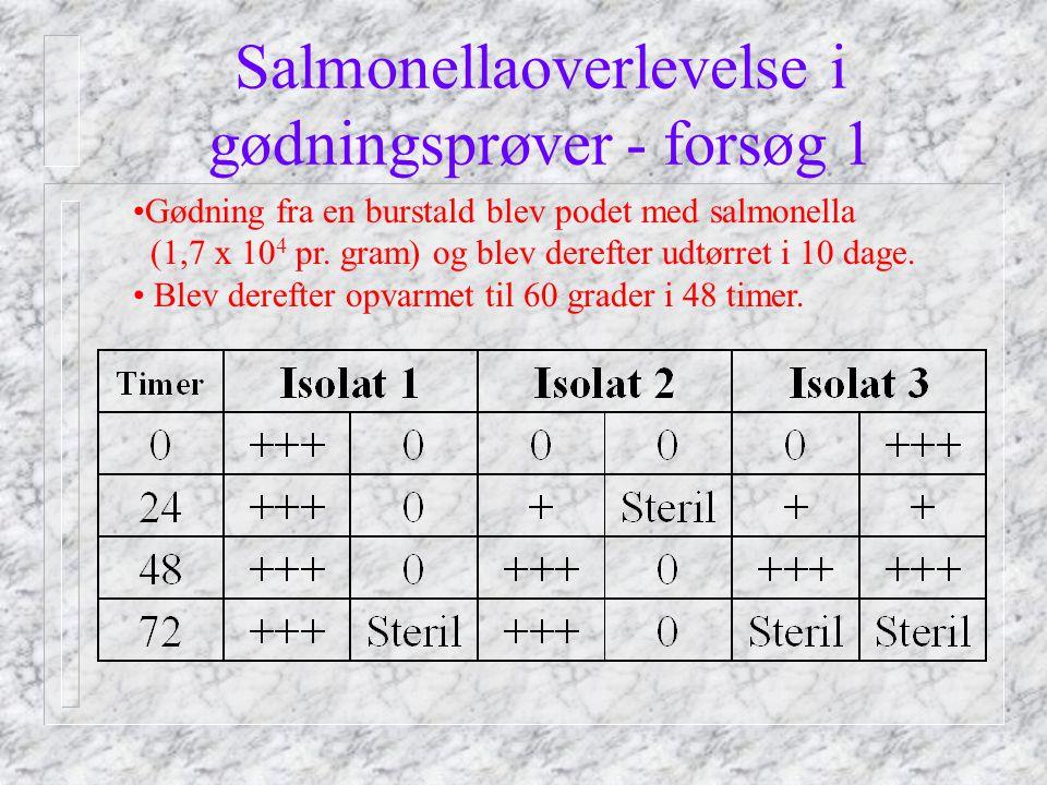 Salmonellaoverlevelse i gødningsprøver - forsøg 1 Gødning fra en burstald blev podet med salmonella (1,7 x 10 4 pr.