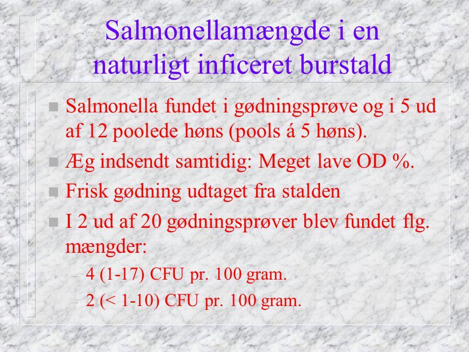 Salmonellamængde i en naturligt inficeret burstald n Salmonella fundet i gødningsprøve og i 5 ud af 12 poolede høns (pools á 5 høns).