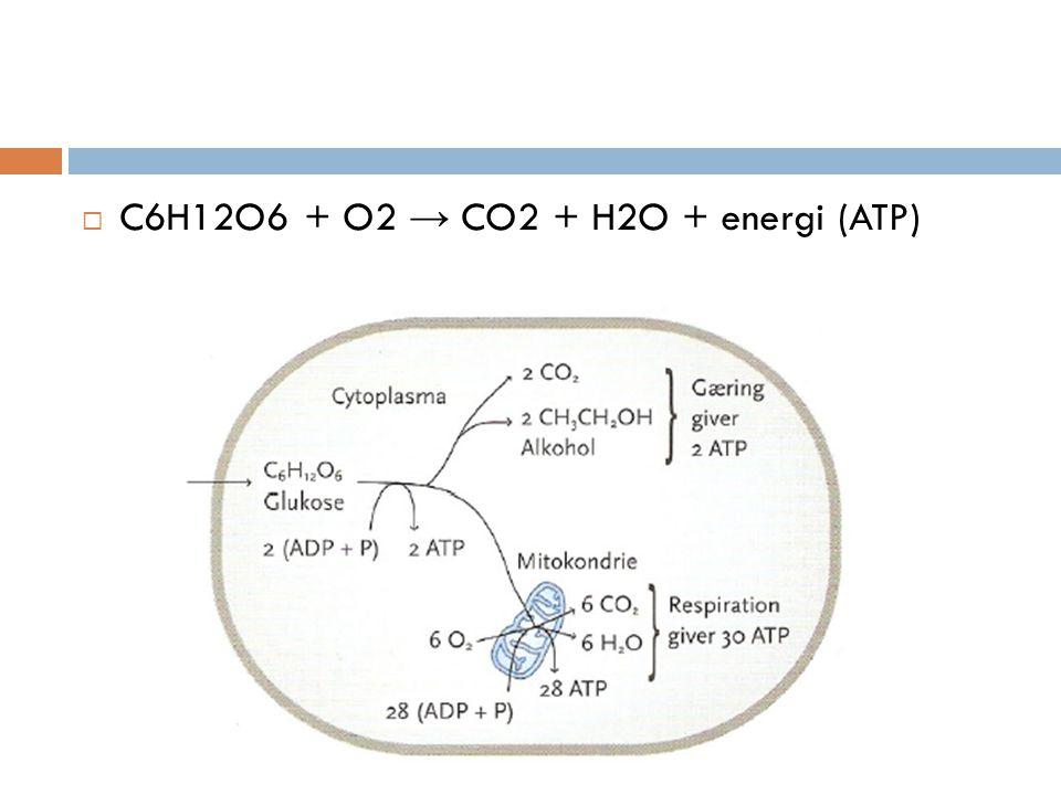  C6H12O6 + O2 → CO2 + H2O + energi (ATP)
