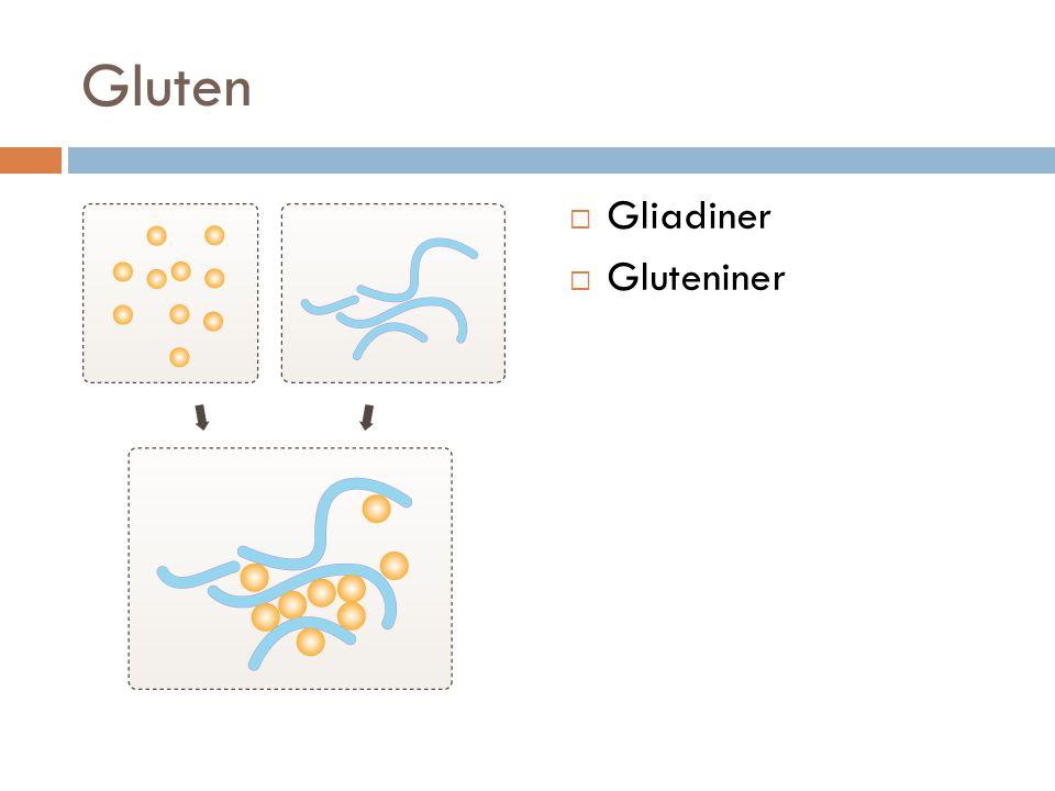 Gluten  Gliadiner  Gluteniner