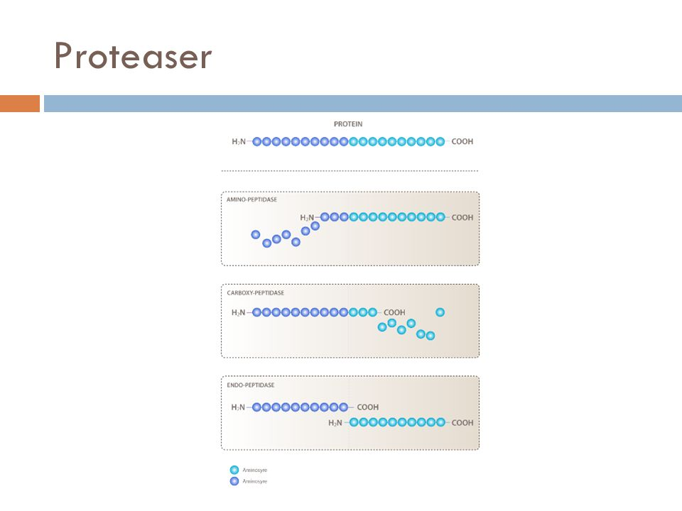 Proteaser