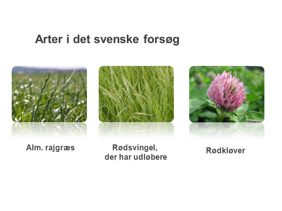 Arter i det svenske forsøg Alm. rajgræsRødsvingel, der har udløbere Rødkløver