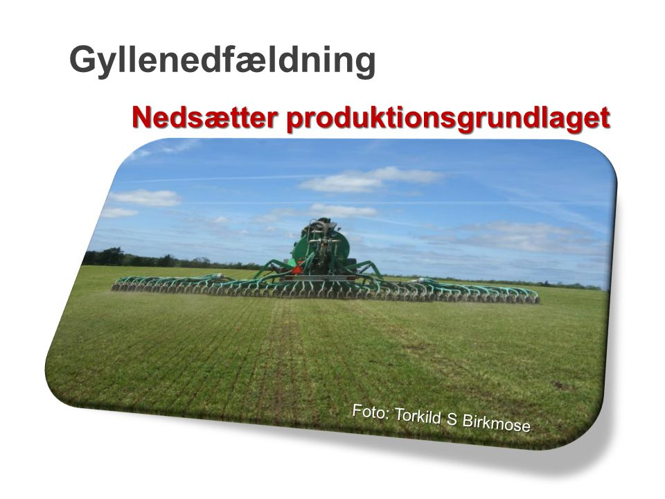 Gyllenedfældning Nedsætter produktionsgrundlaget Foto: Torkild S Birkmose