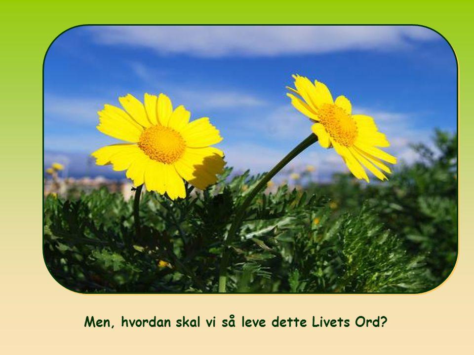 Når I nu er oprejst med Kristus, så søg det, som er i himlen, dér hvor Kristus sidder ved Guds højre hånd.