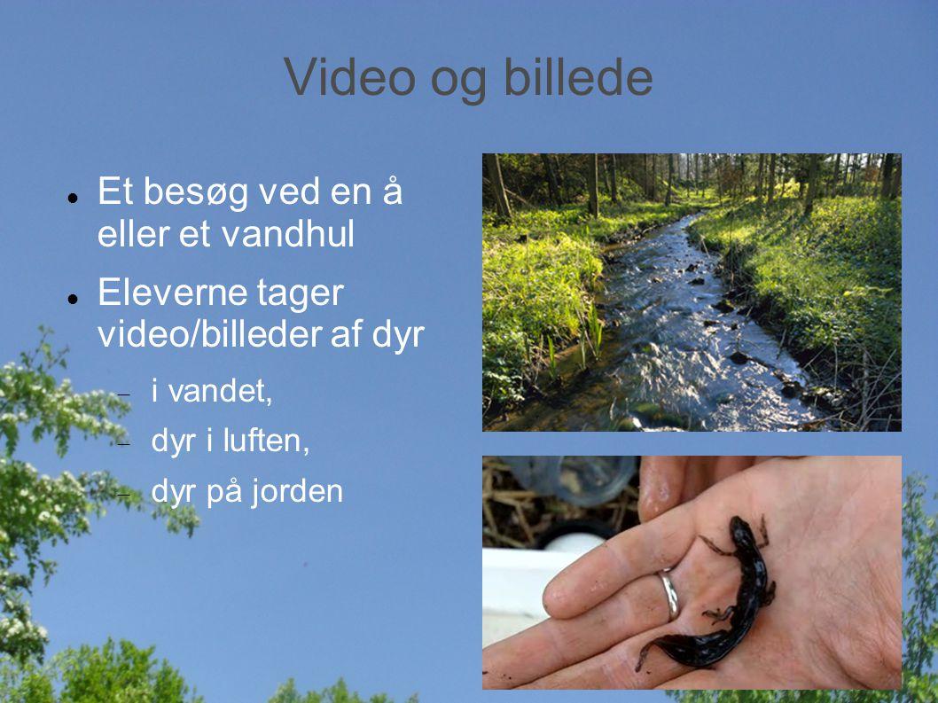 Video og billede Et besøg ved en å eller et vandhul Eleverne tager video/billeder af dyr  i vandet,  dyr i luften,  dyr på jorden
