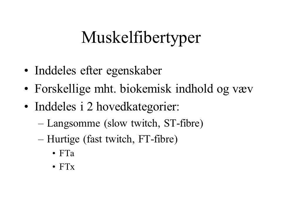 Muskelfibertyper Inddeles efter egenskaber Forskellige mht.