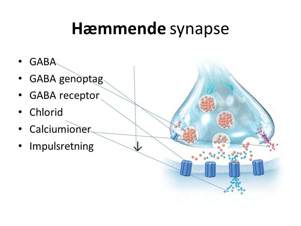 Hæmmende synapse GABA GABA genoptag GABA receptor Chlorid Calciumioner Impulsretning ↓