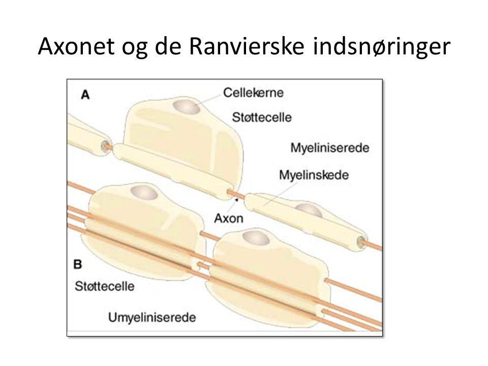 Natrium-kaliumpumpen/ Jens Christian Skou får nobelprisen i kemi i 1997 for påvisning af Natrium-kaliumpumpen Ionpumpen sørger for balancen mellem cellernes og den omgivende vævsvæskes natrium- og kalium-ioner ved at pumpe kalium-ioner ind i cellen og natrium-ioner ud.