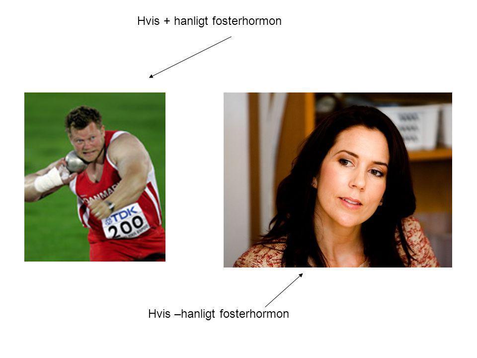 Hvis + hanligt fosterhormon Hvis –hanligt fosterhormon