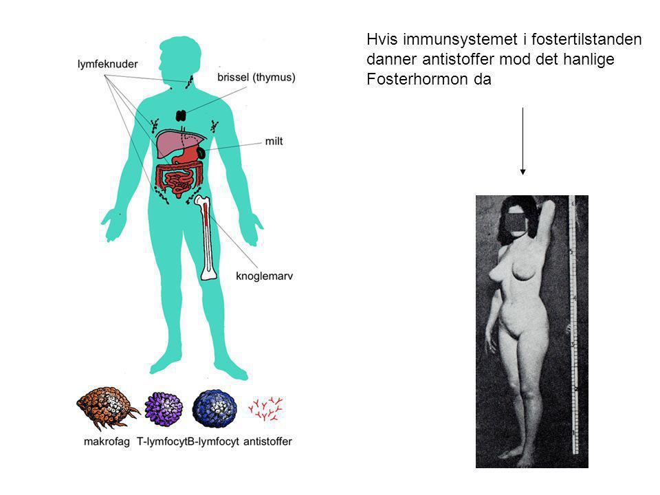 Hvis immunsystemet i fostertilstanden danner antistoffer mod det hanlige Fosterhormon da