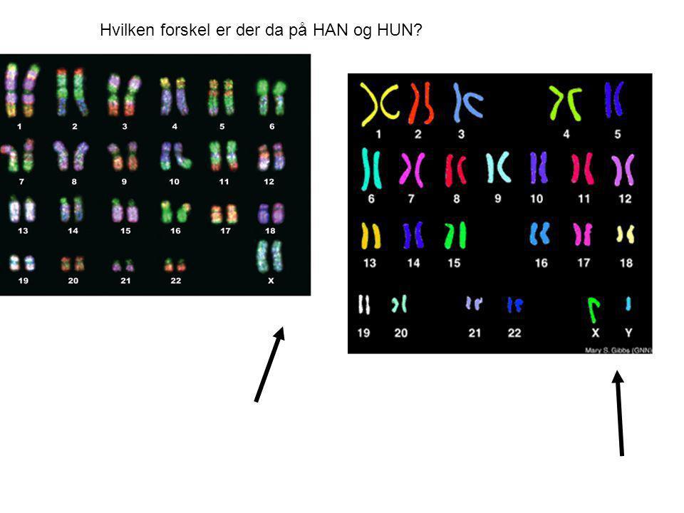 Hvilken forskel er der da på HAN og HUN