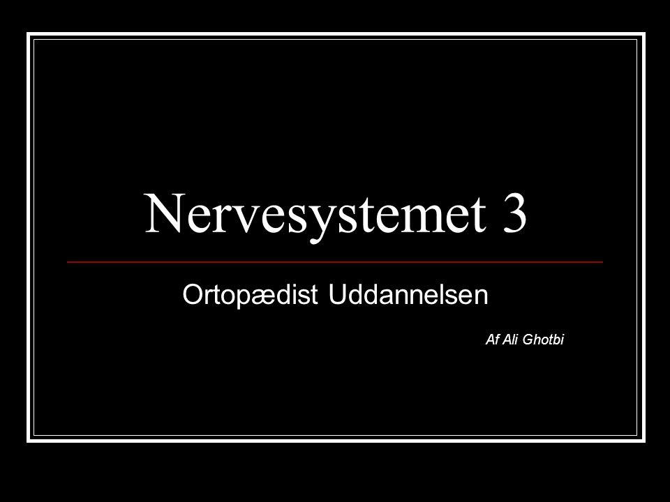 Nervesystemet 3 Ortopædist Uddannelsen Af Ali Ghotbi