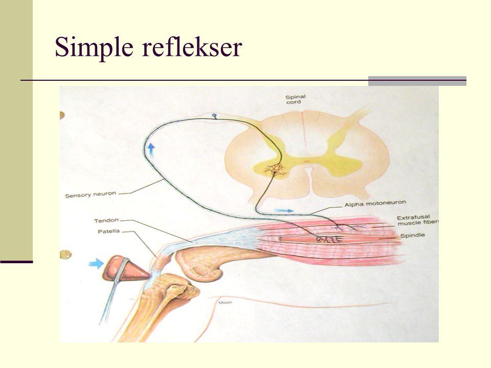 Simple reflekser