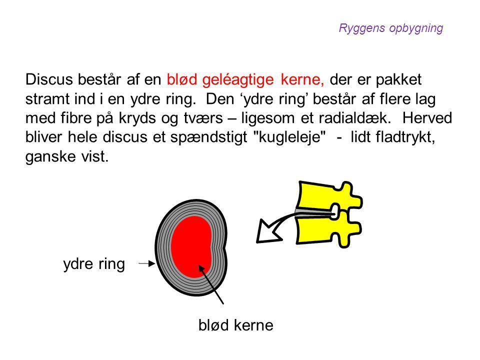 Discus består af en blød geléagtige kerne, der er pakket stramt ind i en ydre ring. Den 'ydre ring' består af flere lag med fibre på kryds og tværs –
