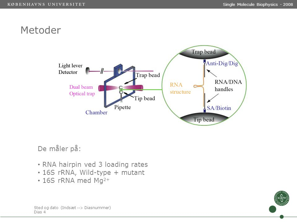 Sted og dato (Indsæt --> Diasnummer) Dias 4 Single Molecule Biophysics - 2008 Metoder De måler på: RNA hairpin ved 3 loading rates 16S rRNA, Wild-type + mutant 16S rRNA med Mg 2+