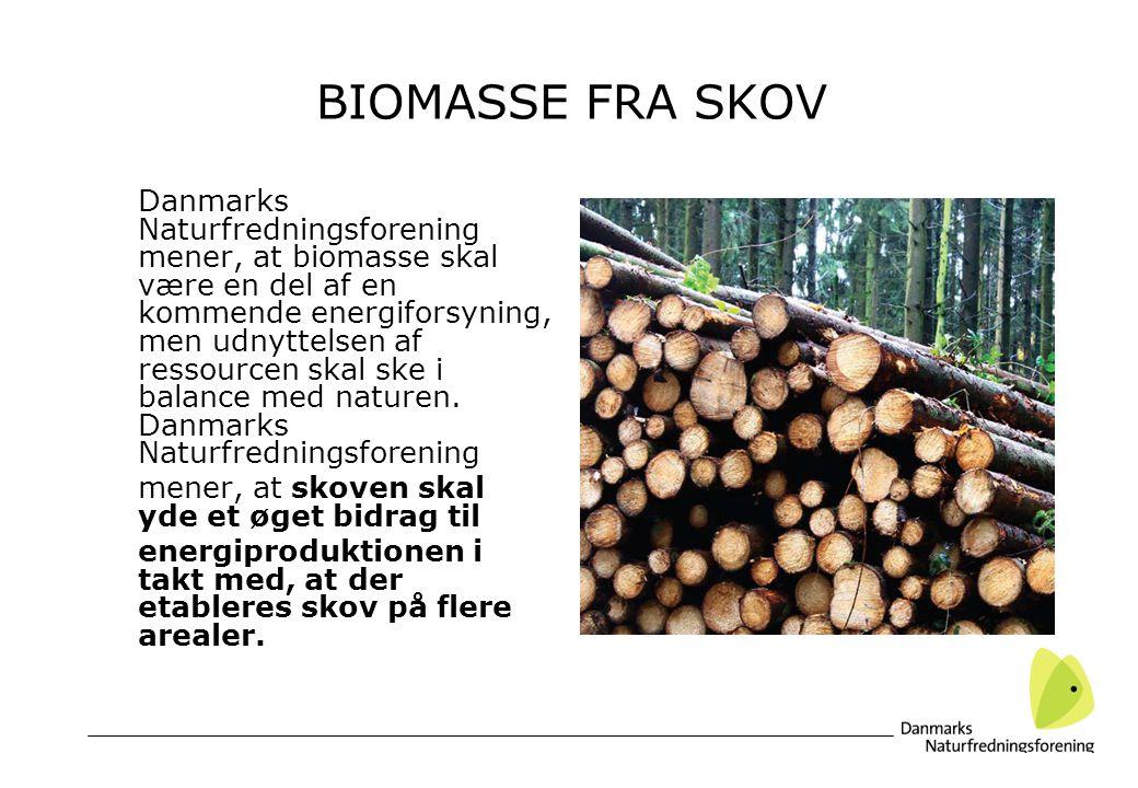 BIOMASSE FRA SKOV Danmarks Naturfredningsforening mener, at biomasse skal være en del af en kommende energiforsyning, men udnyttelsen af ressourcen skal ske i balance med naturen.