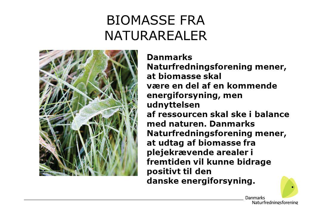 BIOMASSE FRA NATURAREALER Danmarks Naturfredningsforening mener, at biomasse skal være en del af en kommende energiforsyning, men udnyttelsen af ressourcen skal ske i balance med naturen.