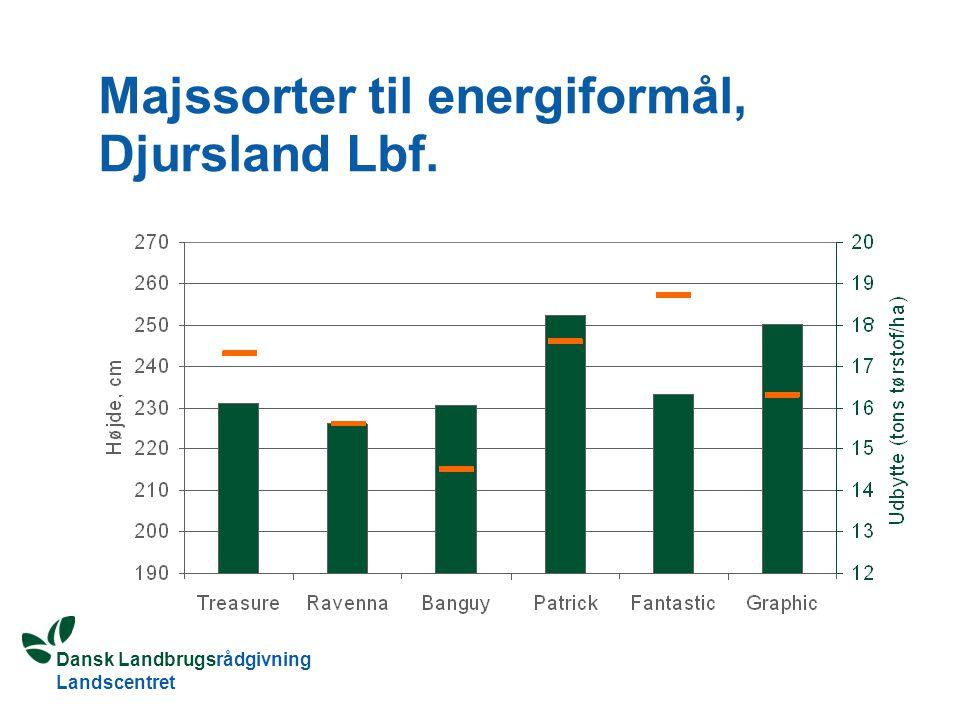 Dansk Landbrugsrådgivning Landscentret Majssorter til energiformål, Djursland Lbf.