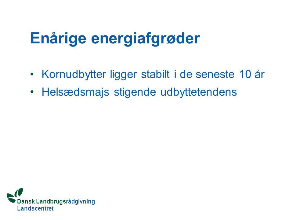 Dansk Landbrugsrådgivning Landscentret Enårige energiafgrøder Kornudbytter ligger stabilt i de seneste 10 år Helsædsmajs stigende udbyttetendens
