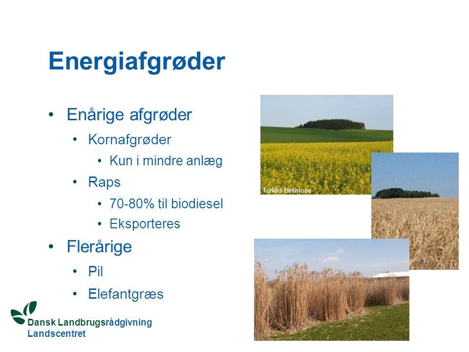 Dansk Landbrugsrådgivning Landscentret Energiafgrøder Enårige afgrøder Kornafgrøder Kun i mindre anlæg Raps 70-80% til biodiesel Eksporteres Flerårige Pil Elefantgræs Torkild Birkmose