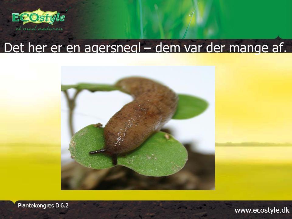 www.ecostyle.dk Plantekongres D 6.2 Det her er en agersnegl – dem var der mange af.