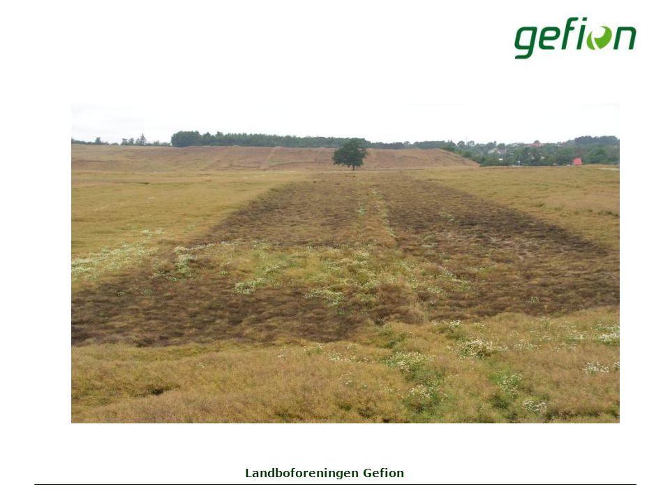Landboforeningen Gefion
