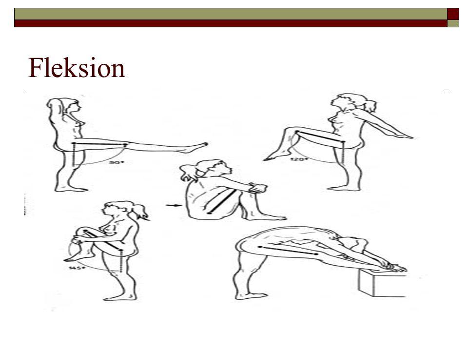 Fleksion