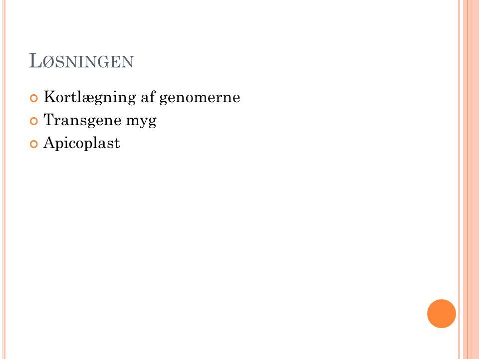L ØSNINGEN Kortlægning af genomerne Transgene myg Apicoplast
