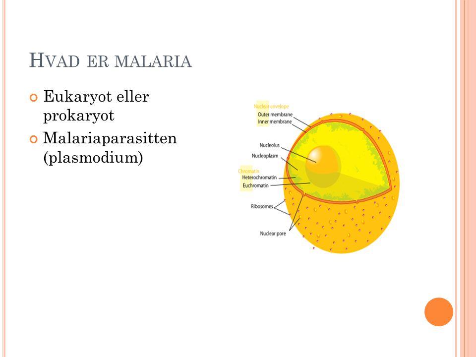 H VAD ER MALARIA Eukaryot eller prokaryot Malariaparasitten (plasmodium)
