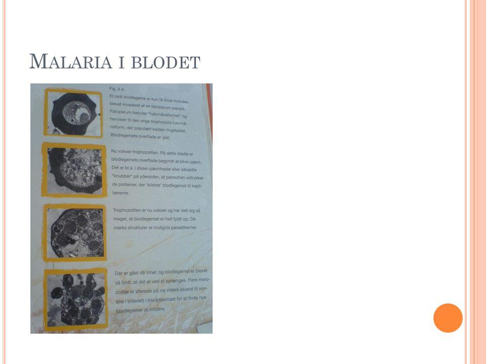 M ALARIA I BLODET