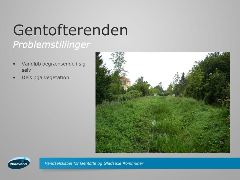 Gentofterenden Problemstillinger Vandløb begrænsende i sig selv Dels pga.vegetation