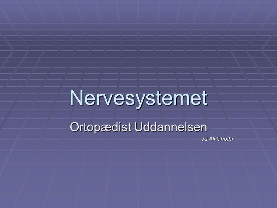 Nervesystemet Ortopædist Uddannelsen Af Ali Ghotbi