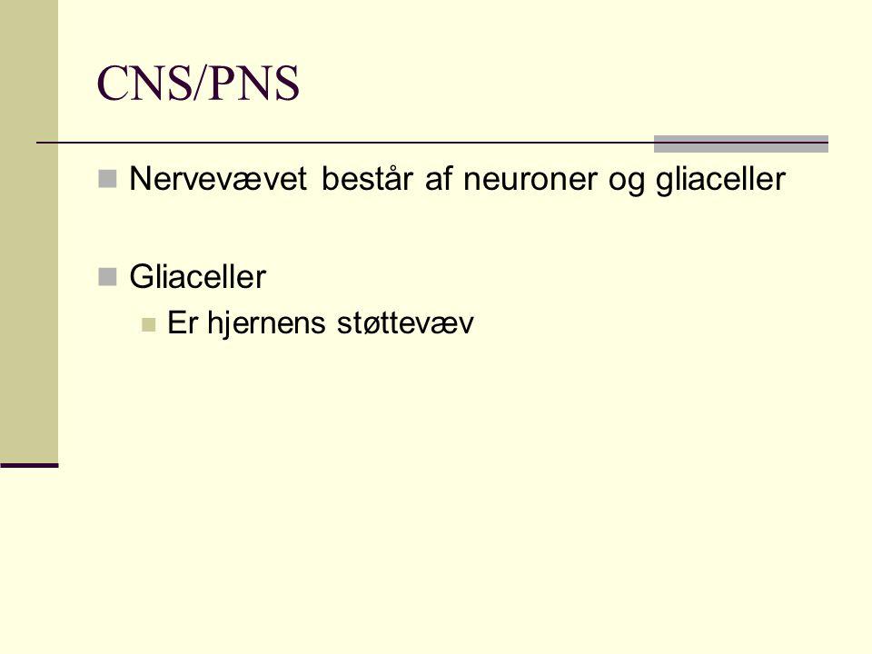 CNS/PNS Nervevævet består af neuroner og gliaceller Gliaceller Er hjernens støttevæv