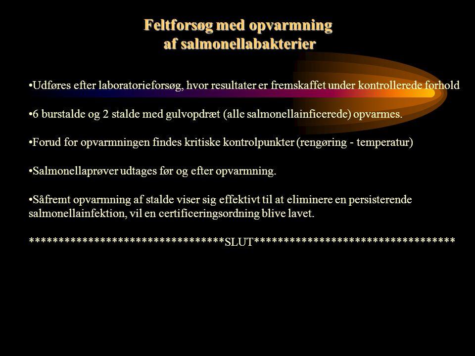 Laboratorieforsøg med opvarmning af salmonellabakterier Overordnet: De værst tænkelige forhold i en stald efterlignes.