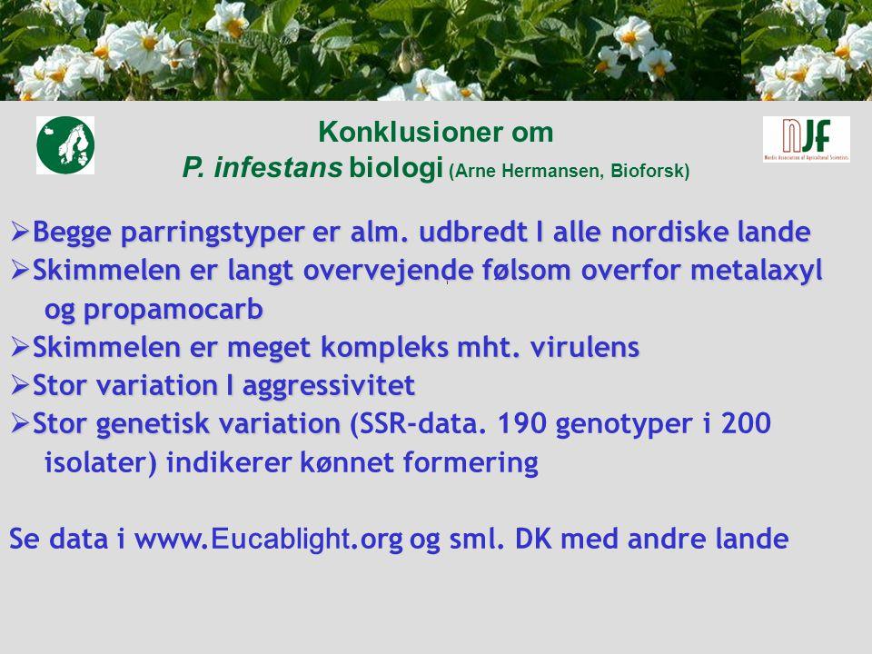 Konklusioner om P. infestans biologi (Arne Hermansen, Bioforsk)  Begge parringstyper er alm.