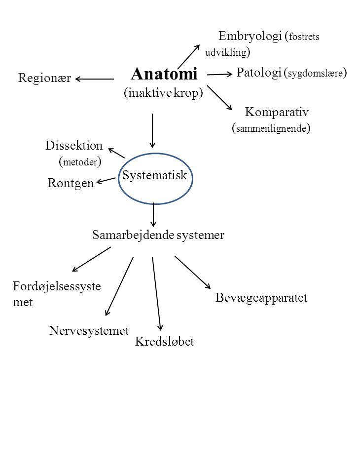 Anatomi (inaktive krop) Embryologi ( fostrets udvikling ) Patologi ( sygdomslære ) Komparativ ( sammenlignende ) Regionær Systematisk Dissektion ( metoder ) Røntgen Samarbejdende systemer Nervesystemet Fordøjelsessyste met Kredsløbet Bevægeapparatet