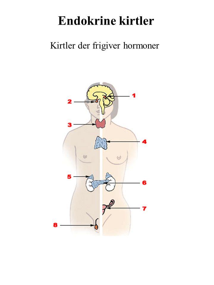Endokrine kirtler Kirtler der frigiver hormoner