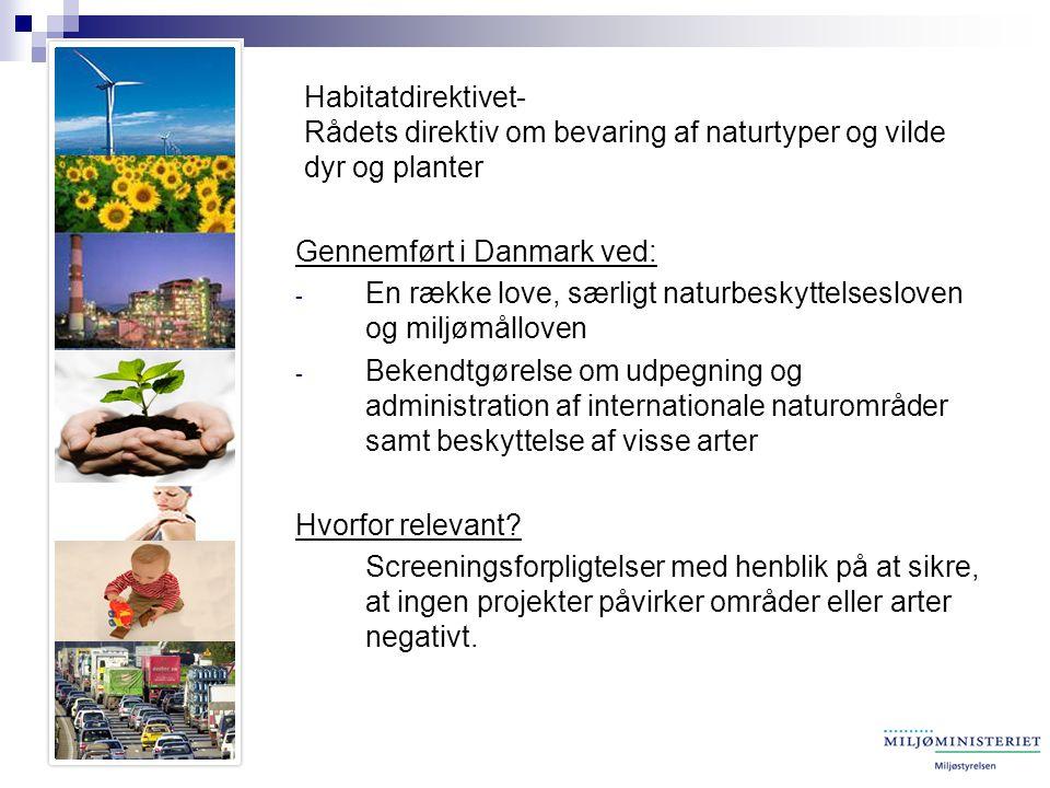 Habitatdirektivet- Rådets direktiv om bevaring af naturtyper og vilde dyr og planter Gennemført i Danmark ved: - En række love, særligt naturbeskyttelsesloven og miljømålloven - Bekendtgørelse om udpegning og administration af internationale naturområder samt beskyttelse af visse arter Hvorfor relevant.