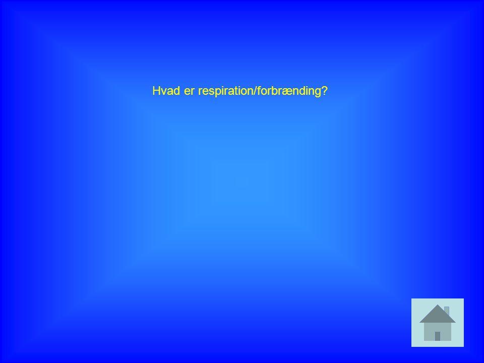 Hvad er respiration/forbrænding