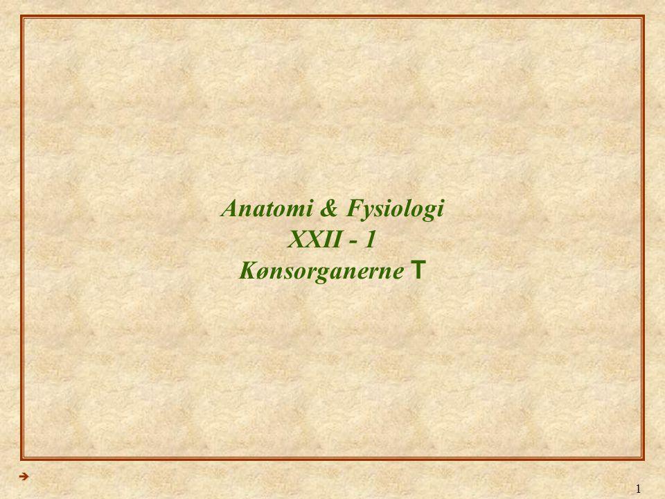 1 Anatomi & Fysiologi XXII - 1 Kønsorganerne T 