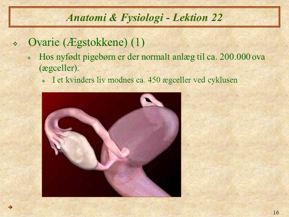 16 Anatomi & Fysiologi - Lektion 22  Ovarie (Ægstokkene) (1)  Hos nyfødt pigebørn er der normalt anlæg til ca.