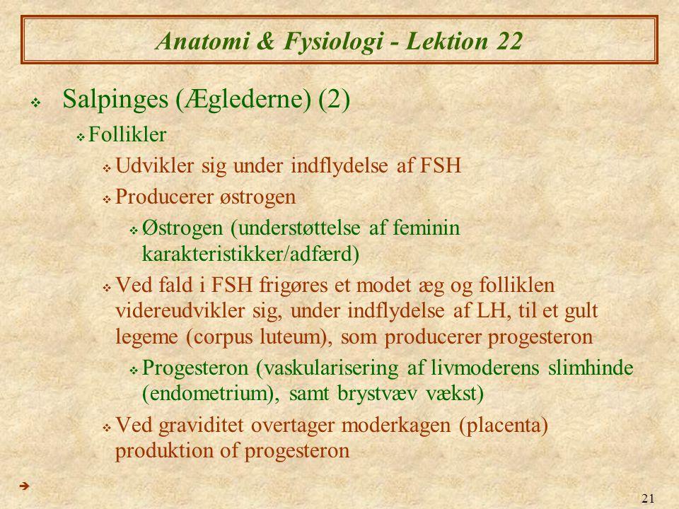 21 Anatomi & Fysiologi - Lektion 22  Salpinges (Æglederne) (2)  Follikler  Udvikler sig under indflydelse af FSH  Producerer østrogen  Østrogen (understøttelse af feminin karakteristikker/adfærd)  Ved fald i FSH frigøres et modet æg og folliklen videreudvikler sig, under indflydelse af LH, til et gult legeme (corpus luteum), som producerer progesteron  Progesteron (vaskularisering af livmoderens slimhinde (endometrium), samt brystvæv vækst)  Ved graviditet overtager moderkagen (placenta) produktion of progesteron 